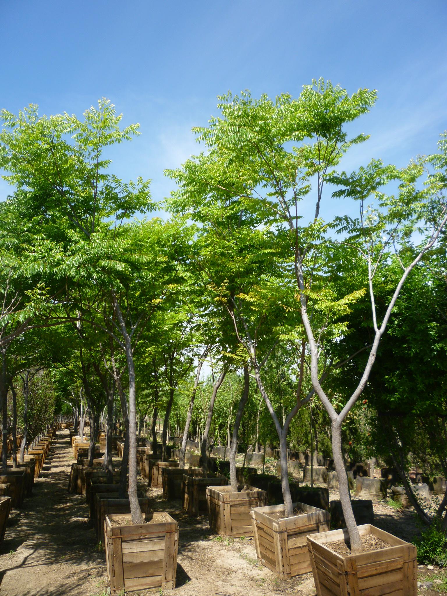 Productos viveros productores de guanajuato vpg for Caracteristicas del vivero